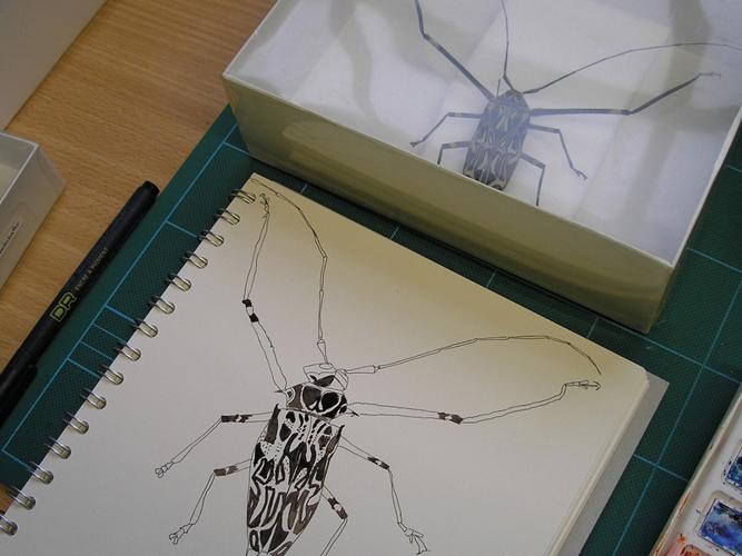 drawing beetle